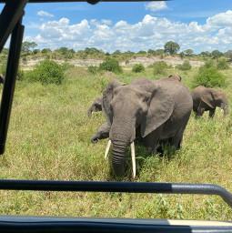 freetoedit safari elephant tanzania ngorongoro