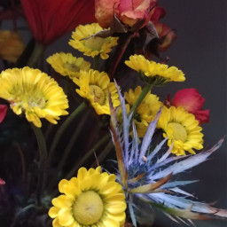 flowers colorful photographybymargarita myphotography