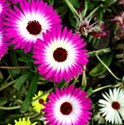 freetoedit freetoeditremix freetoeditcollection flowerphotography flowers pink pinkaesthetic nature outdoors myphotography closephotography