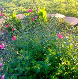 garden sunlight spring grass flowers