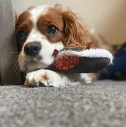 freetoedit cute dog