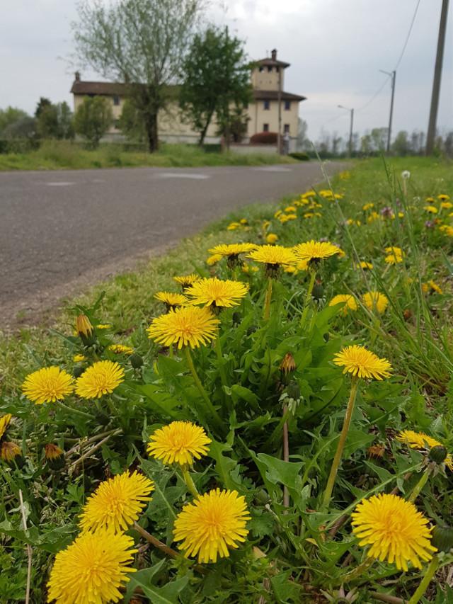 Buon weekend my dear friends  #landscape #tarassaco #myphotography #campagna #passeggiata #cascina #italia