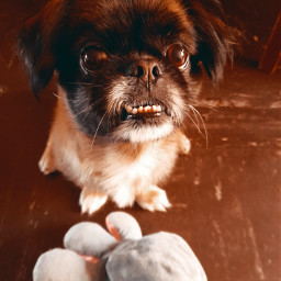 freetoedit mypet lovemydog🐶 pet mydog petlove lovemydog