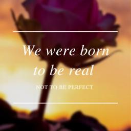 rose quote blurbackground