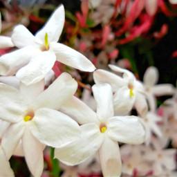 freetoedit originaledit flowersphotography flowersinthegarden flowerslover