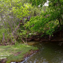 myhappiness creek nature trees spring