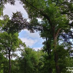 lookingup trees green sky narturesurprisesyou