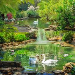garden gardenpond swans waterfall freetoedit