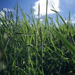 freetoedit grass nature sun naturephotography pcshadows