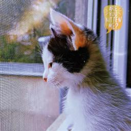 oreothecat kitten catslover