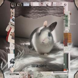 bunny bunnyrabbit freetoedit