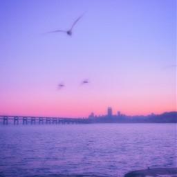 interesting pink purple water buildings birds city sea ocean aethstetic aethsetic art wallpaper freetoedit