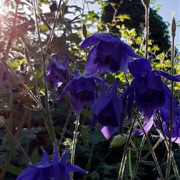 wildflowers purpleflowers naturephotography macro