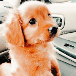 freetoedit cute
