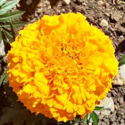 orangeflower floweringarden sun macro
