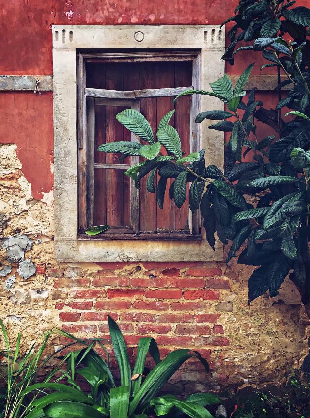 #urbanexploration #abandonedplaces #oldhouse #abandonedhouse #housewall #window #stoneframed #textures #grungetexturedwall #oldconstruction #oldarchitecture #tree #greeleaves #plants #wildplands #urbanexploringphotography