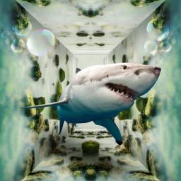 mastershoutout surreal mirroreffect cube drawtools photomanipulation madewithpicsart freetoedit
