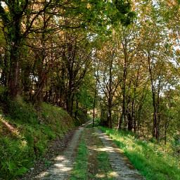 royalroad path hiking ruralwalking forest