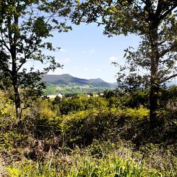 royalroad hiking walking forest landscape