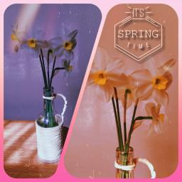 springaesthetic daffodils