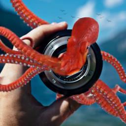 octopus freetoedit ircthroughyourprism throughyourprism