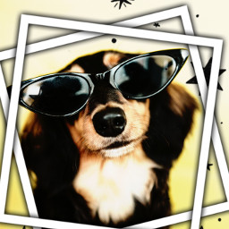 dog edit cute friday puppy doglover dogwithglasses smalledit picsart mnmandbebe freetoedit