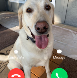 doggo fyp answer decline freetoedit