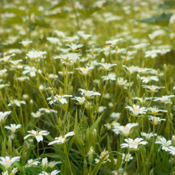 freetoedit meadow flowers nature naturephotography
