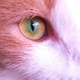 freetoedit cat pet cateye catlover