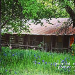 springtime2021 texasbluebonnets
