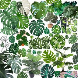collage freetoedit plant plants