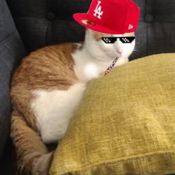 cat replay replays remix interesting photography cats hat edit freetoedit foryou