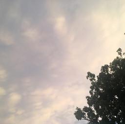 fotografia tarde arboles nubes naturaleza nublado fondodepantalla