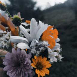 freetoedit srilanka nuwaraeliya flowers