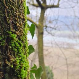 phonephotography dayearth beautifulscenery beautifulnature verde green albero wood spring springtime2021 summer