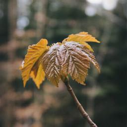 freetoedit nature leaf leaves spring pcmothernature