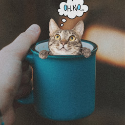 myedit cup coffee morning goodmorning cat madewithpicsart picsarteffects picoftheday freetoedit
