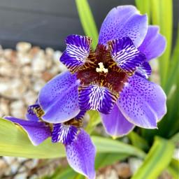freetoedit myphoto flowers flowerphotography flowerpower beautiful