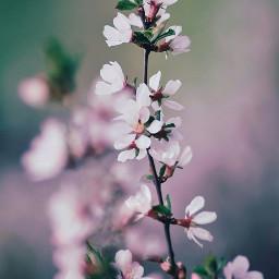 toronto springtime spring photooftheday photographer picsart picoftheday