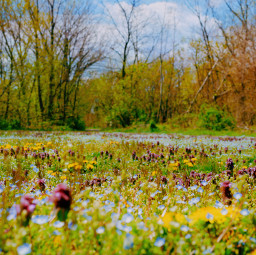 freetoedit earthday happyearthday earthdaycelebrations earthdaytime nature meadows flowers wildflowers spring trees colorful vibrant picsarteffects natura naturaleza blumen flores fiore fte