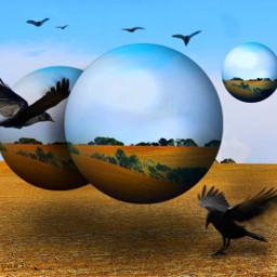 mastershoutout surrealism surreal field birds nature madewithpicsart