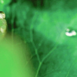 leaf pretty nature freetoedit mothernature