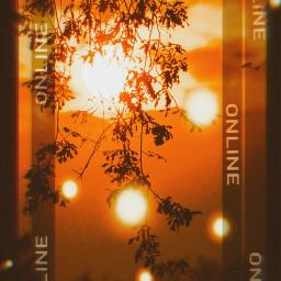 sunlight sunshine sunnyeffect freetoedit