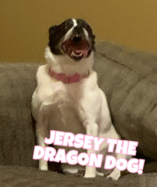"""Smash here! After our last post, Jersey so embarrassed me!! I decided to get her back and post this picture of her being absolutely insane!! 🐾  🐾——————————————————🐾      Hi there! We are the sibling doggies. I'm Smash, and 𝙸'𝚖 𝙹𝚎𝚛𝚜𝚎𝚢. We will write in different fonts to show you who's writing! Normal font is me, Smash. 𝙰𝚗𝚍 𝚝𝚑𝚒𝚜 𝚏𝚘𝚗𝚝 𝚒𝚜 𝚖𝚎, 𝙹𝚎𝚛𝚜𝚎𝚢! We are 9 years old and we came from the adoption center. 𝙰𝚍𝚘𝚙𝚝 𝚍𝚘𝚗'𝚝 𝚜𝚑𝚘𝚙! A lot of times my owner says I look like a fox and Jersey looks like a chihuahua. Which we are mix breeds. Our mommy and daddy are both mix breeds, and they're mixed with mixed breeds, so we probably have lots of dogs in us! Which makes us so unique. 𝙰𝚗𝚢𝚠𝚊𝚢, 𝚂𝚖𝚊𝚜𝚑 𝚌𝚘𝚞𝚕𝚍 𝚐𝚘 𝚘𝚗 𝚊𝚗𝚍 𝚘𝚗. 𝙱𝚞𝚝 𝙸 𝚑𝚘𝚙𝚎 𝚢𝚘𝚞 𝚎𝚗𝚓𝚘𝚢 𝚘𝚞𝚛 𝚍𝚘𝚐𝚐𝚢 𝚓𝚘𝚞𝚛𝚗𝚎𝚢!  🐾——————————————————🐾  Our owners account: @fadeykittens  🐾——————————————————🐾  Comment """"🐾"""" to join! Comment """"🦴"""" to be removed! Comment """"🐶"""" if you changed your user!  𝙾𝚞𝚛 𝚃𝚊𝚐𝚕𝚒𝚜𝚝: (𝚝𝚊𝚐𝚐𝚒𝚗𝚐 𝚘𝚞𝚛 𝚘𝚠𝚗𝚎𝚛𝚜 𝚏𝚛𝚒𝚎𝚗𝚍𝚜, 𝚜𝚊𝚢 𝚒𝚏 𝚢𝚘𝚞 𝚠𝚊𝚗𝚝 𝚘𝚏𝚏!)  @eventing_ace778 🏇 @itsequxus 🐴 @aquaveri 🐬 @sunnyxclouds_ ☁️ @liv_r0sey 🌹 @sunflxwrblxss 🌻  🐾——————————————————🐾 Follower count: 5 🐾——————————————————🐾  #dogs #thesiblingdoggies #besties #fadeykittens #smashandjersey"""