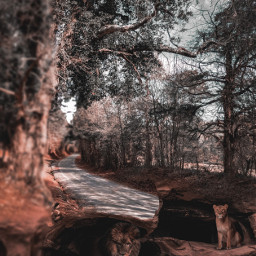 freetoedit outdoor nature landscape forest road naturelover trees animal lions caves doubleexposure photoblending madewithpicsart imagination photomanipulation surreal picsarteffects picsartedit picoftheday photoedit remixed