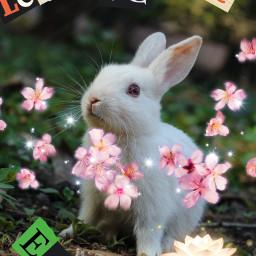 earthday2021 bunny freetoedit