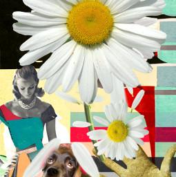freetoedit shelovesme shelovesmenot bouquetofdaisies daisypetals