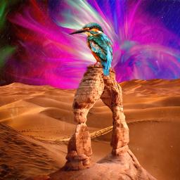 birds landscape bird desierto colorful freetoedit