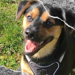 challenge dog freetoedit