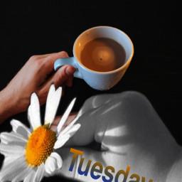 tuesday irccoffeetime coffeetime freetoedit